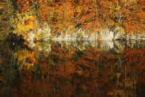 Goldener Herbst X by meleah
