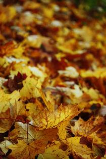 Goldener Herbst XI von meleah
