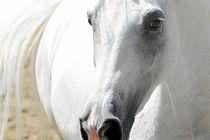 Schöner Schimmel  von cavallo-magazin