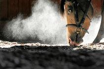 Pferdenase von cavallo-magazin