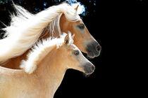 Stute mit Fohlen von cavallo-magazin