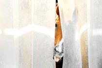 Pferd schaut durch Vorhang by cavallo-magazin
