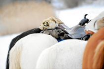 Pause beim Ausritt von cavallo-magazin
