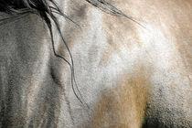 Pferdefell - Farben  von cavallo-magazin