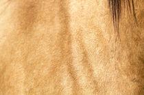 Pferdefell - Farben by cavallo-magazin