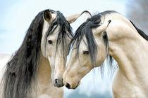 Fabelhafte Falben by cavallo-magazin