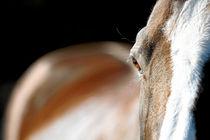 Pferd im Abendlicht von cavallo-magazin