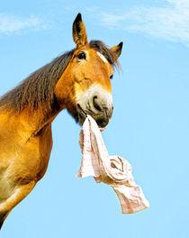 Pferd apportiert by cavallo-magazin