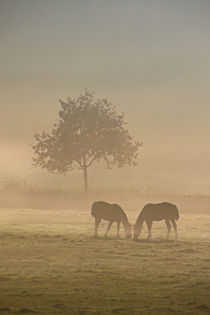 '2 Pferde im Nebel' by Bernhard Kaiser