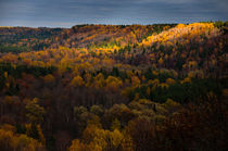 Autumn Contrast by Janis Upitis