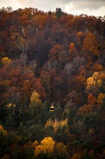 Autumn Fire Trees von Janis Upitis