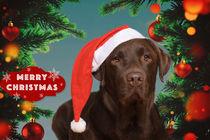 Christmas Time / 2 von Heidi Bollich