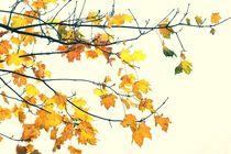 Herbstlaub am Baum von leddermann