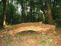 gefallenes Holz von Angelika  Schütgens