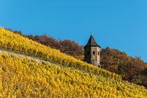 Herbstliche Weinberge am Fuße des Drachenfels von Frank Landsberg