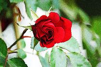 Rose I von Uwe Ruhrmann