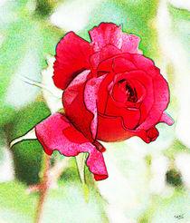 Rose III by Uwe Ruhrmann