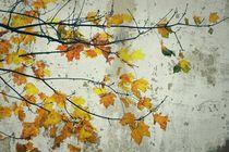Herbstlicher Laubbaum vor Beton von leddermann