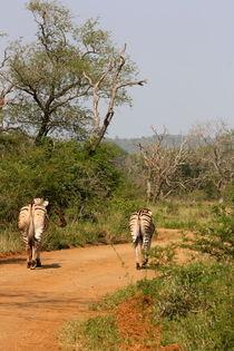 Zwei Zebras auf Wanderschaft im Safaripark von Marita Zacharias