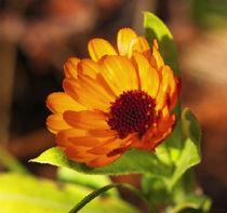 orange Blüte von Uwe Ruhrmann