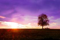 Einsamer Baum by darlya