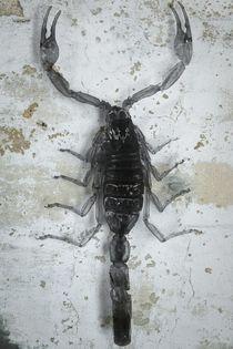 Skorpion auf Beton by leddermann