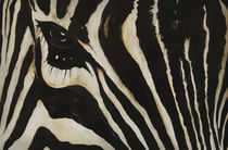 Zebra by Edward Lucas