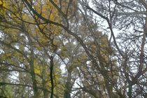 Herbstwald abstrakt von leddermann