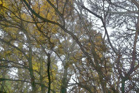Herbstwald-2015-11-001n