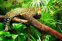 Jaguar im Dschungel von Belize von Mellieha Zacharias