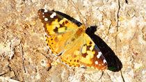 Schmetterling I von Uwe Ruhrmann