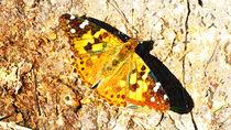 Schmetterling II by Uwe Ruhrmann