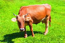 Kuh III von Uwe Ruhrmann