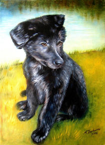 Hundeportrait-labrador
