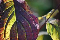 'last leaves standing tough... 11' von loewenherz-artwork