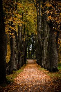 Way Through by Janis Upitis