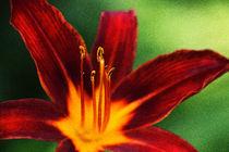 Blütenstaub von Uwe Ruhrmann