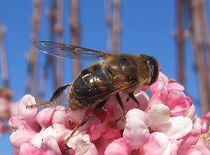 Bienenfleißig von Angelika  Schütgens
