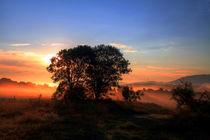 Ein Baum by Gerhard Albicker