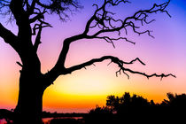 Tree At Sunset von Graham Prentice