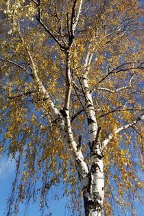 Autumn-tree-bun