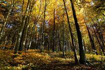 Herbstwald von Bruno Schmidiger