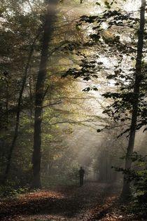 Nebel im Wald by Bruno Schmidiger