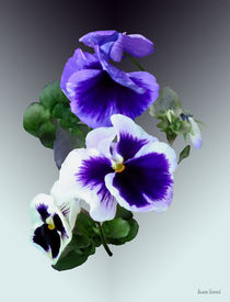 Three Purple Pansies in a Row von Susan Savad