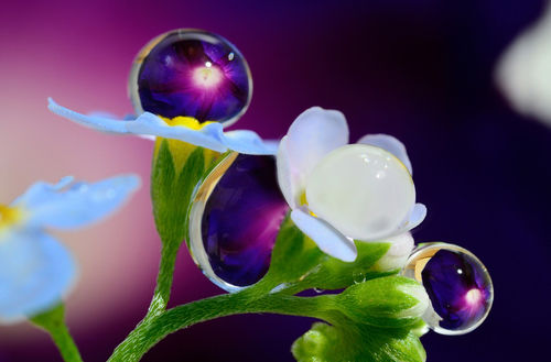 Drops-of-rain-reminiscent-of-the-jewels-on-the-flowers