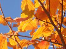 Herbstblätter 1 von Cathrin Dorner