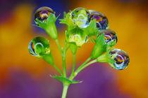 Droplets-bells von Yuri Hope