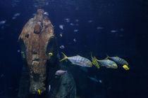 Fische by Mathias Karner