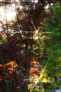 Sonnenschein zwischen Bäumen von Mathias Karner