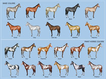 Horse color chart von William Rossin